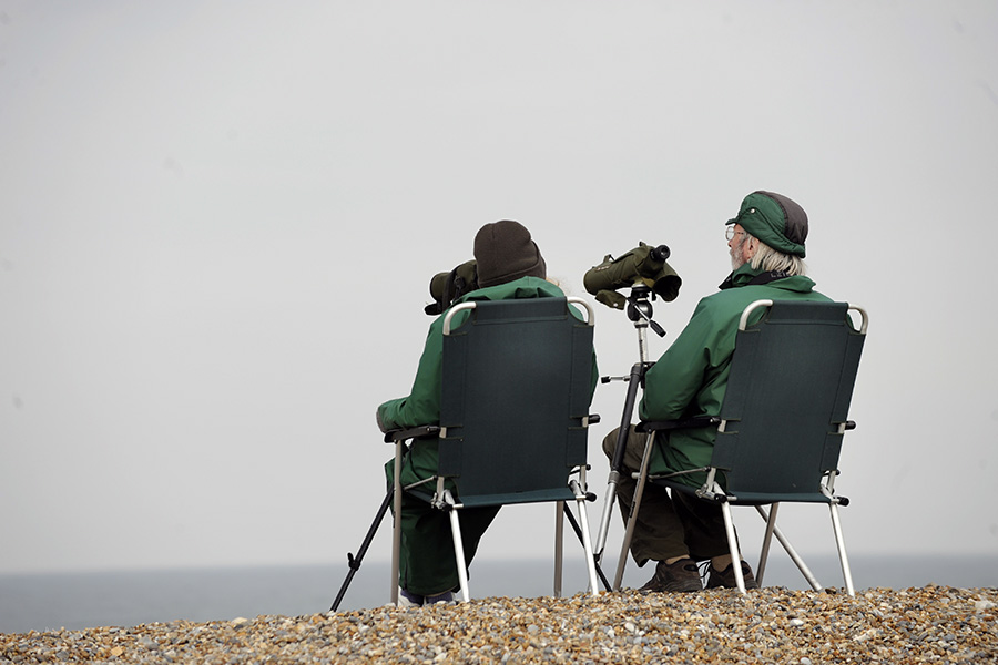 Birdwatching at Weybourne